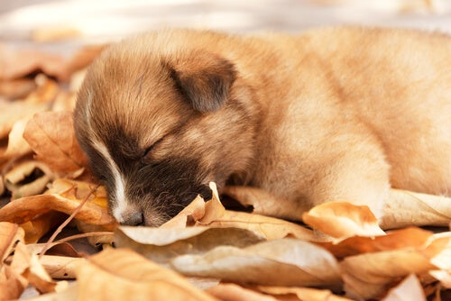 Din hunds personlighed ifølge dens sovestilling