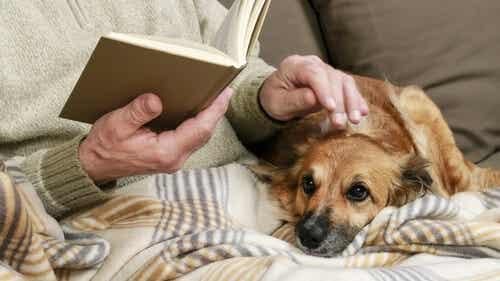 Typer af kræft en hund kan fornemme - My Animals