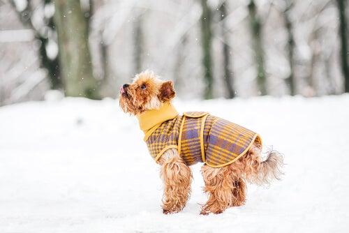 5 tips til at holde din hund varm denne vinter
