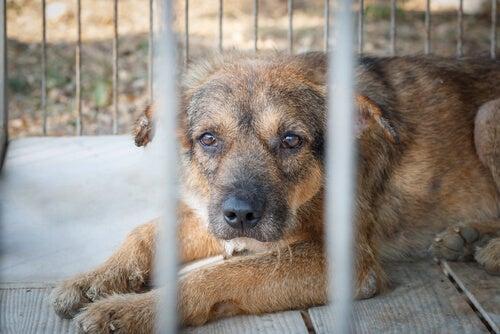 Stakkels hund i bur