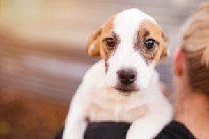 Symptomer på hundedepression