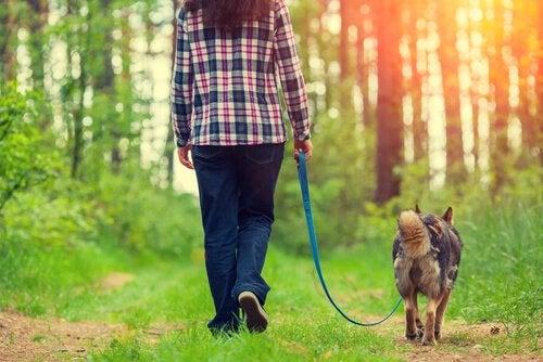 4 trin til at forbedre gåturen med din hund