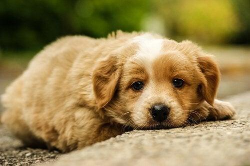 Hvad stiller du op med mishandlede hunde