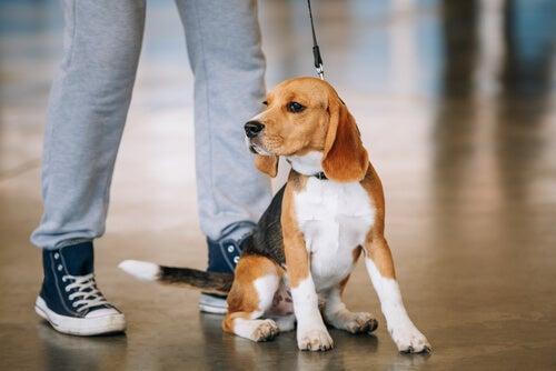 Din hund kender dig bedre end nogen anden