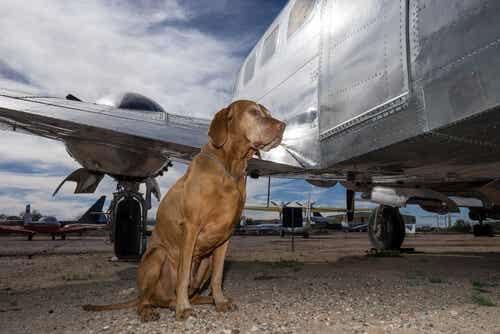 Farerne ved at rejse med din hund i lastrummet