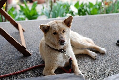 Hvad skal du gøre hvis din hund bliver forgiftet?