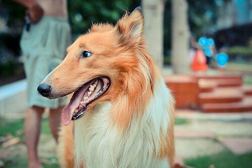 Sådan finder du ud af hvor gammel din hund er