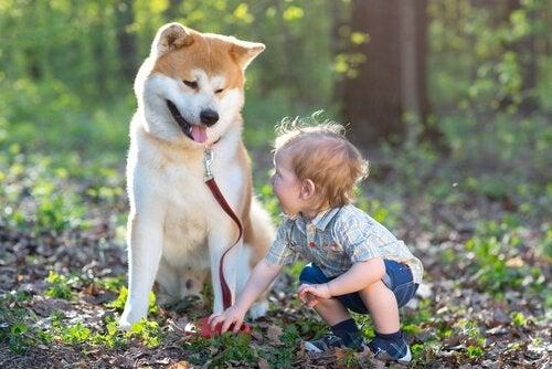 Sådan kan hørehunde ændre et døvt barns liv