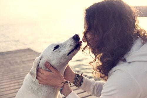 Hund slikker kvinde.