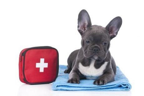 Hund ved siden af førstehjælpskasse.