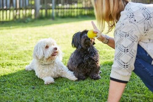 Hunde elsker dig mere hvis de kan forstå dig
