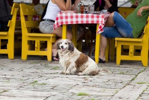 Hund med ejere på restaurant.