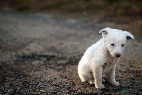 Lille hund på gaden
