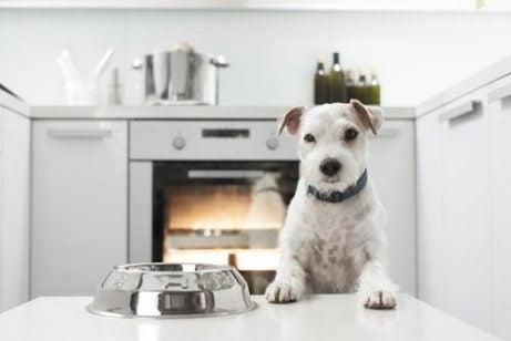 Hund venter på mad