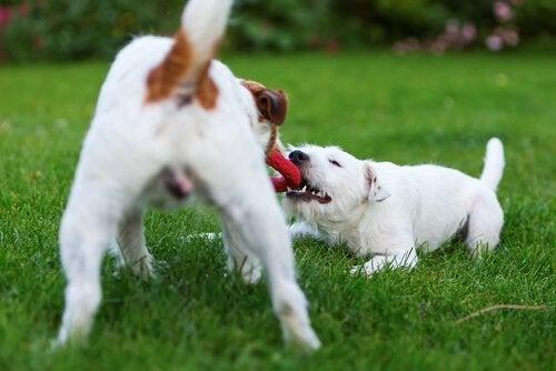 5 ting du kan gøre for at gøre din hund glad