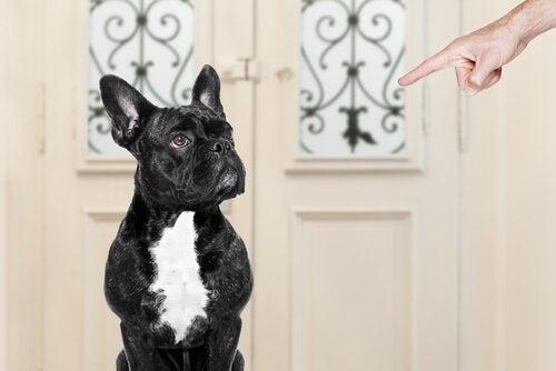 truende pegefinger mod hund
