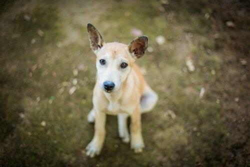 Forladte kæledyr - en video der vil få dig til at tænke
