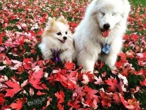 hoshi og zen i blomster