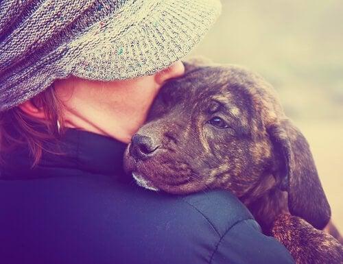 hund får kærlighed