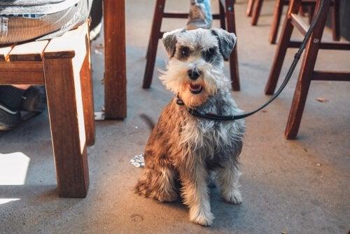 hund med snor