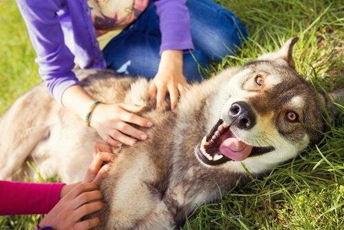 Hvad føler din hund når den ser dig?
