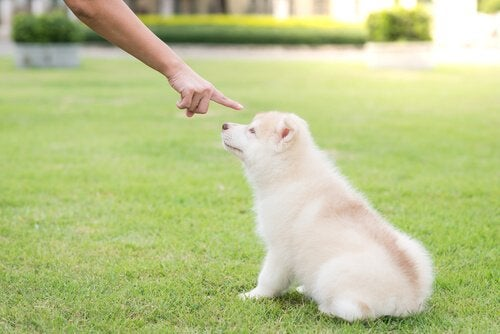 hund irettesættes