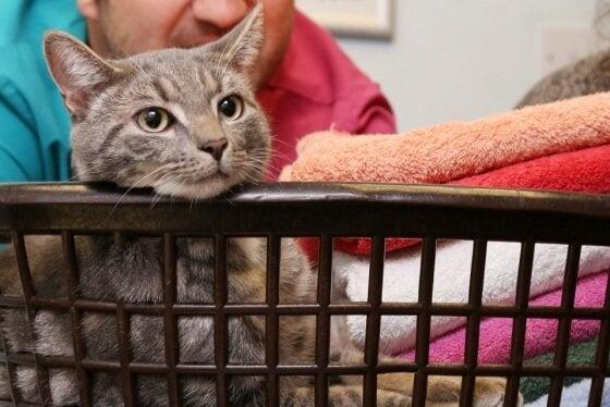 kat i en kurv med håndklæder