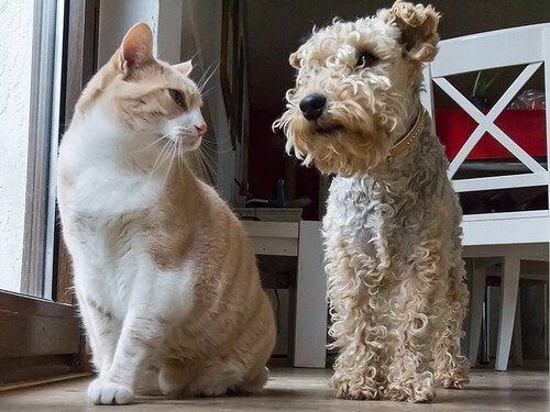 kat og hund ser på hinanden