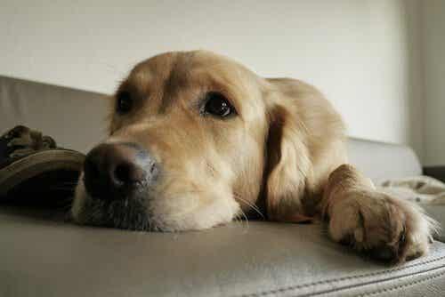 Sådan sørger du for din hunds naturlige instinkter