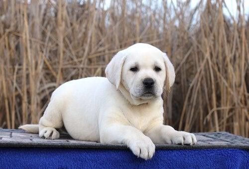 hunden der blev kendt i en reklame for toiletpapir