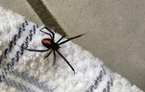 Derfor bør du aldrig slå en edderkop ihjel