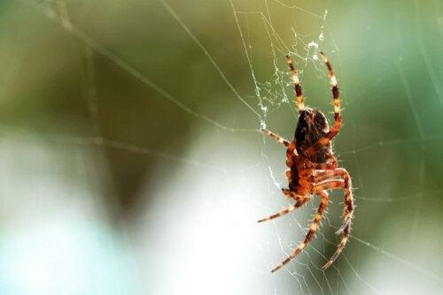 nærbillede af edderkop i sit spind