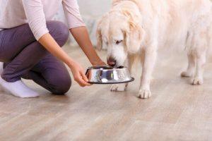 En ejer fodrer hendes kæledyr til jul