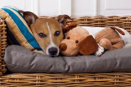 Vidste du, at du kan overføre sygdomme til dit kæledyr?