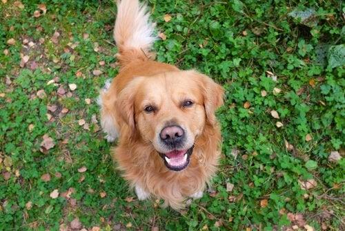 Hvordan udtrykker hunde sig?