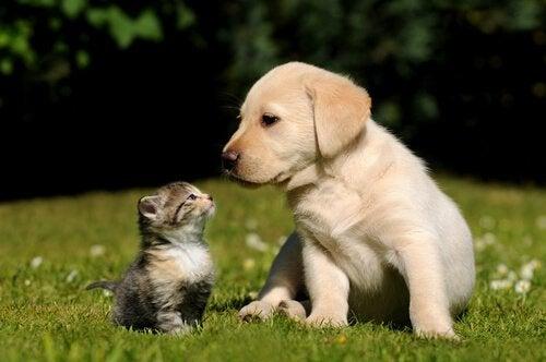 Hvilke dyr kan ikke bo sammen?