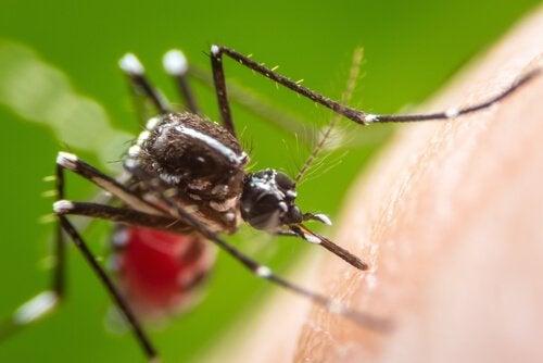 myg vil svæve rundt om dit hoved