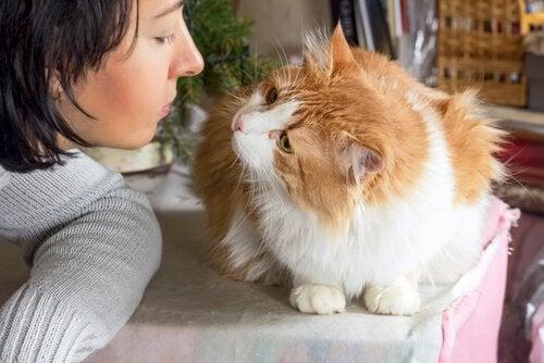 Hvordan ved du om din kat elsker dig?