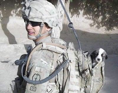 soldat med lille hund i sin rygsæk