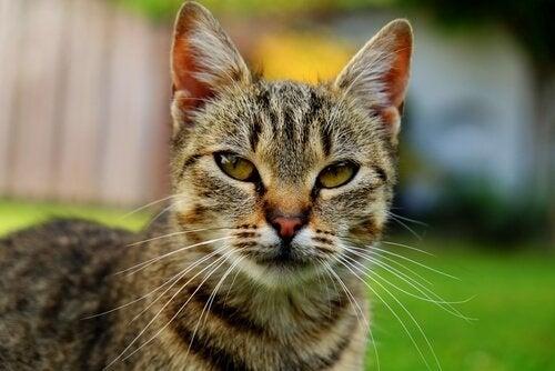 Hvad er din kats alder i menneskeår?