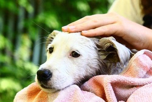 Klap hunden for at få et nært forhold til en hund