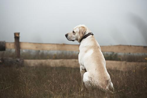 En hund ser efter sin ejer
