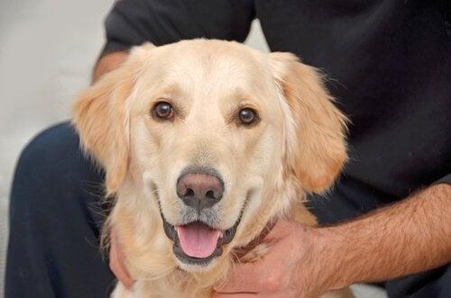 hund med farveændring på snuden