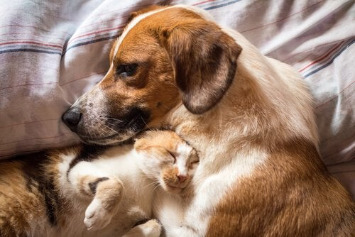 Sådan behandles diarré hos katte og hunde
