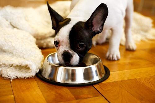 Sørg for hunden ikke overspiser
