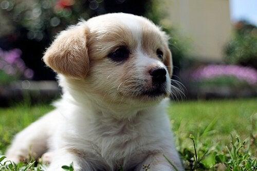 Hvad får en hunds snude til at skifte farve?