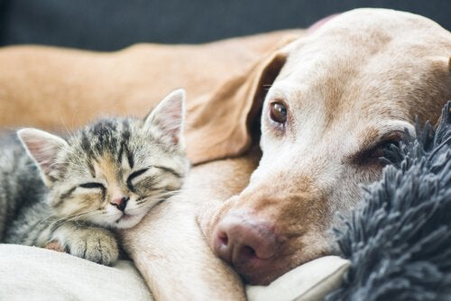 Når din hund bliver ældre, vil den slappe mere af