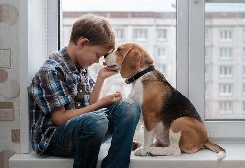 Beagles: Interessante ting du skal vide om racen