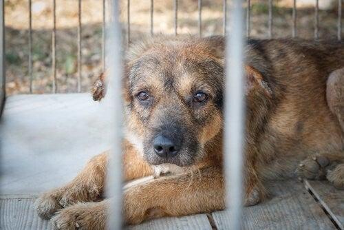 Skjult dyremishandling: Det skal du vide