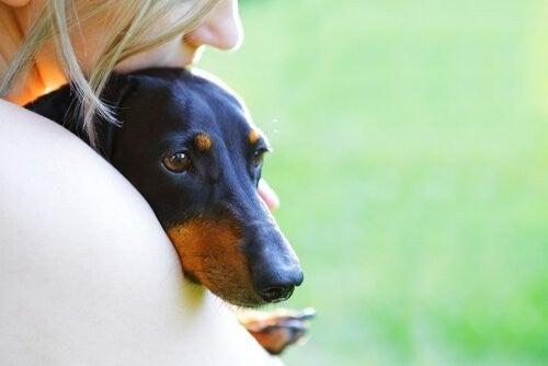 Hund sammen med sin ejer